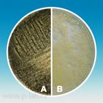 A: <i>Aspergillus brasiliensis</i><br>B: <i>Candida albicans</i>