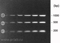 DNA-kvantifikační markery QSK 1000 bp, 500 bp a 200 bp
