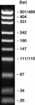 pUC19 DNA marker